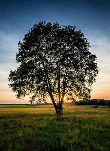 Photograph - Sunset Tree by Ryan Wyckoff
