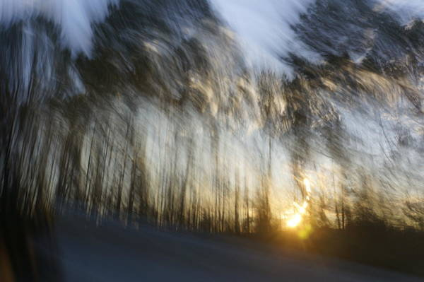 Photograph - Sunset Under The Pines by Gerald Grow