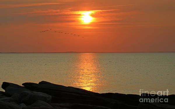 Wall Art - Photograph - Sunset Waterfowl At Halibut Point by Steve  Gass