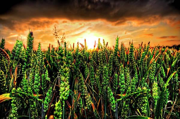 Wall Art - Photograph - Sunset Wheat by Meirion Matthias