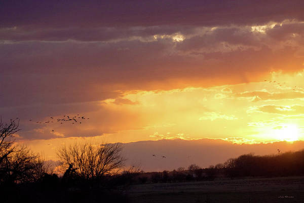 Photograph - Sunset With Crane Flyby by Judi Dressler