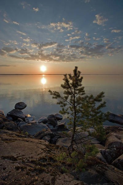 Photograph - Sunset With Fir by Aivar Mikko