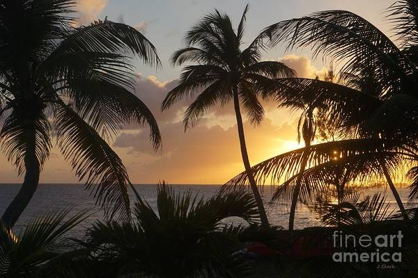 Wall Art - Photograph - Sunset With Palms   by John Clark
