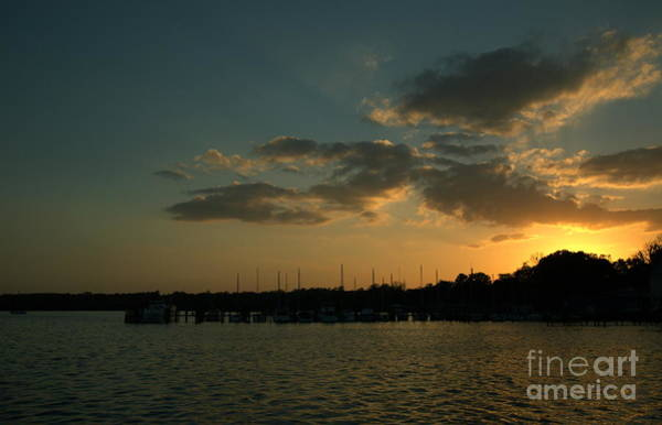 Photograph - Sunset With Sea Life by Kathi Shotwell