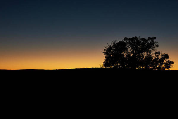 Wall Art - Photograph - Sunset With Tree by Paul Freidlund