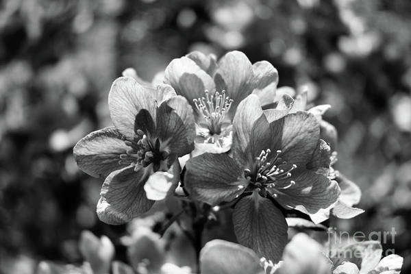 Wall Art - Photograph - Sunshine And Springtime - Black And White by Alicia Espinosa