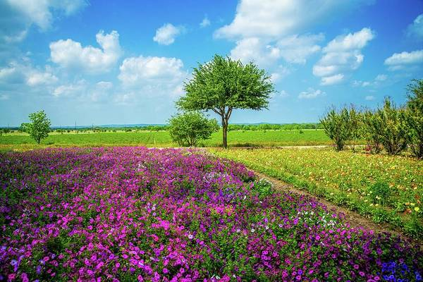 Photograph - Sunshine And Wildflowers by Lynn Bauer