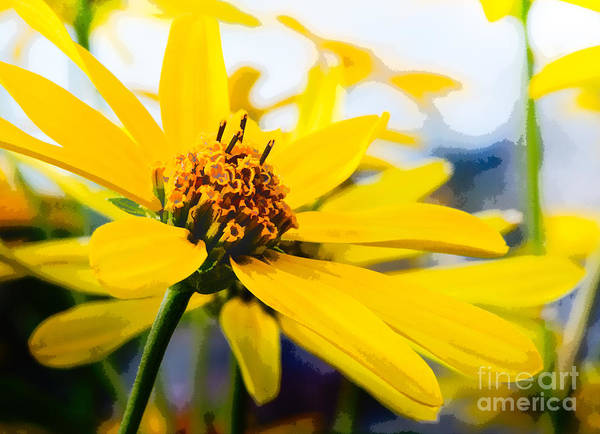 Photograph - Sunshine In A Meadow by Michael Arend