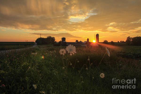 Photograph - Sunshine In My Soul  by Viviana  Nadowski