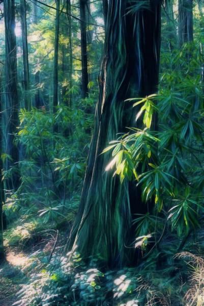 Photograph - Sunshine In The Forest by Yulia Kazansky