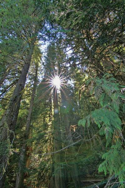 Photograph - Sunshine In The Green Hoh Rainforest by Dan Sproul