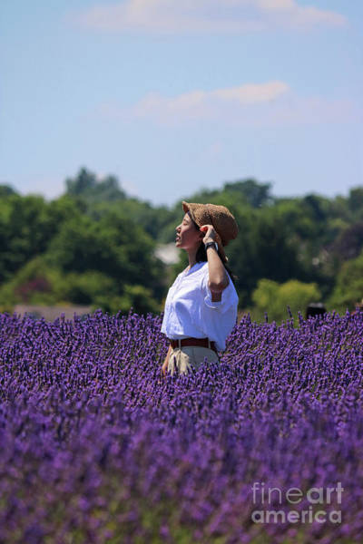 Photograph - Sunshine In The Lavender Fields by Julia Gavin