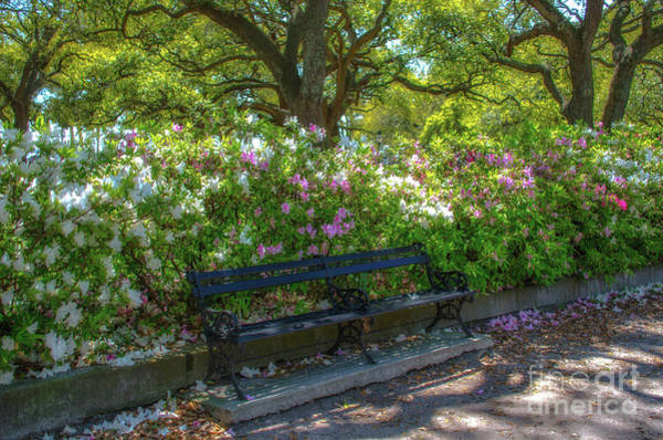 Photograph - Sunshine In The Park by Dale Powell