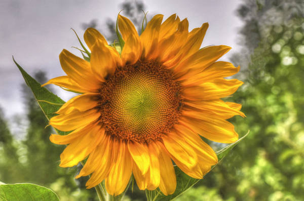 Wall Art - Photograph - Sunshine On A Cloudy Day by Donna Kennedy