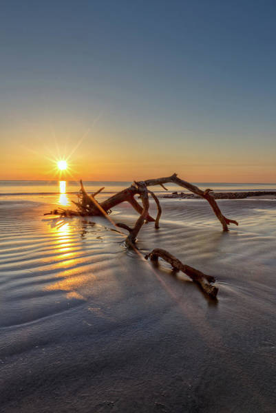 Photograph - Sunshine On Driftwood by Debra and Dave Vanderlaan