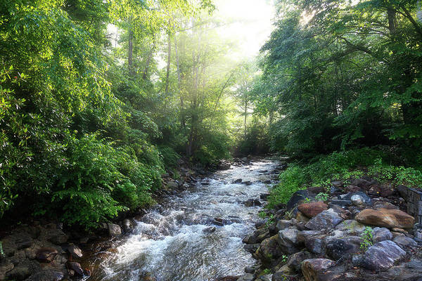 Photograph - Sunshine On The Creek by Jill Lang