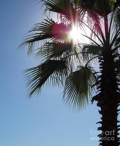 Photograph - Sunshine Palm by D Hackett