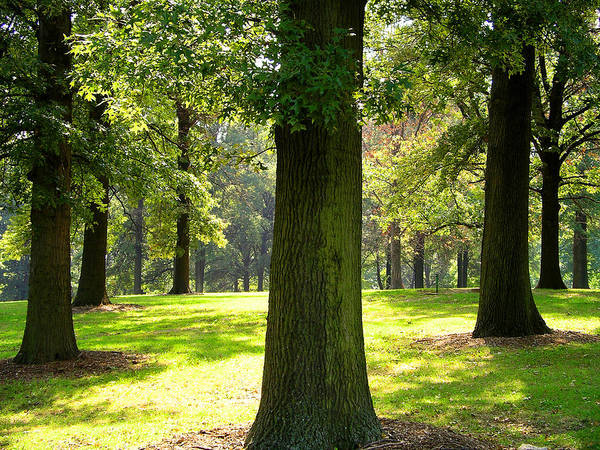 Photograph - Sunshine Trees Forest Park by Patrick Malon