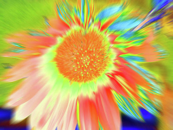 Photograph - Sunswoop by Cris Fulton