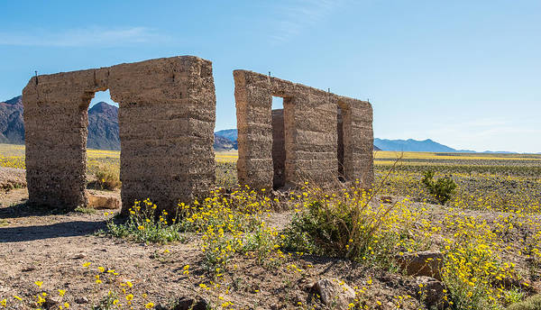 Wall Art - Photograph - Super Bloom At Ashford Mill Ruins by Paul Freidlund