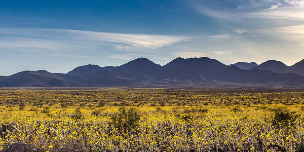 Road Side Photograph - Super Bloom Death Valley  by Peter Tellone