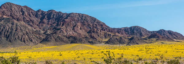 Furnace Creek Photograph - Super Bloom Pano by Paul Freidlund