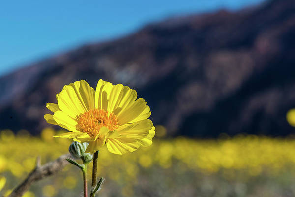 Wall Art - Photograph - Super Bloom Up Close by Paul Freidlund