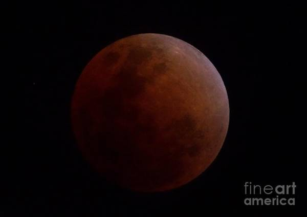 Photograph - Super Blue Blood Moon In Eclipse Close Up by Christopher Shellhammer