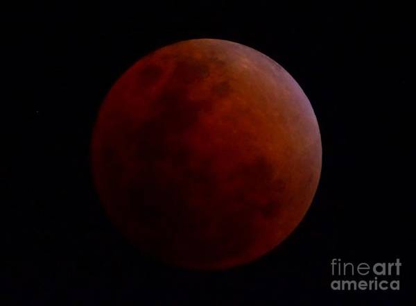 Photograph - Super Blue Blood Moon January 31 2018 by Christopher Shellhammer