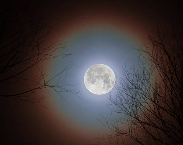 Photograph - Super Moon 2017 by Mary Almond