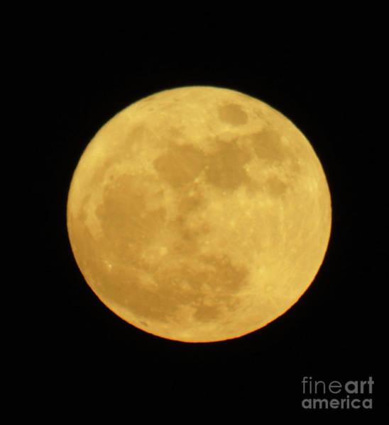 Photograph - Super Moon December 2016 by D Hackett