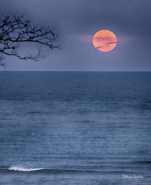 Photograph - Super Moon Waning by Rebecca Samler