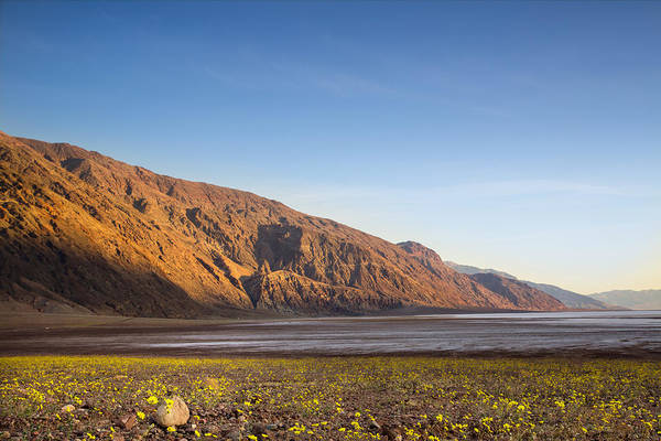 Death Valley Np Photograph - Superbloom In Death Valley by Kunal Mehra