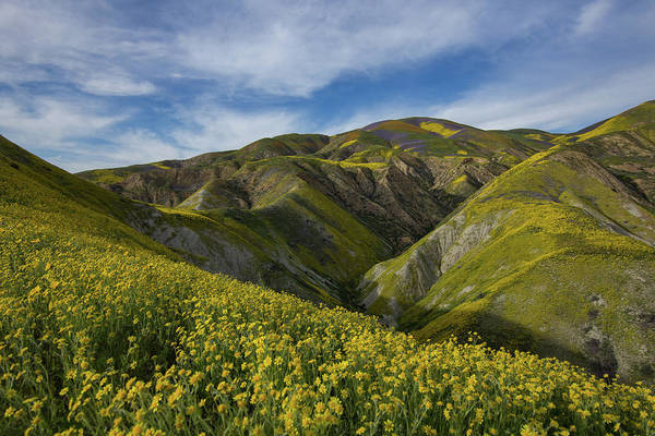 Wall Art - Photograph - Superbloom In The Carrizo Plains by Bridget Calip
