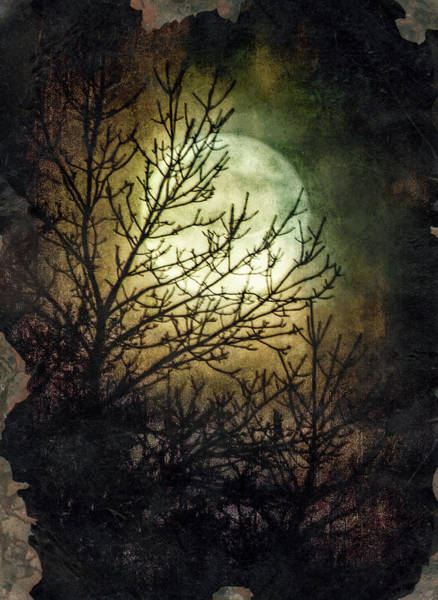 Wall Art - Photograph - Supermoon At Retzer Nature Center- Wisconsin by Jennifer Rondinelli Reilly - Fine Art Photography