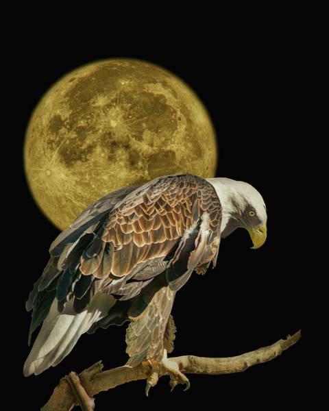 Perigee Moon Photograph - Supermoon - Bald Eagle by Nikolyn McDonald