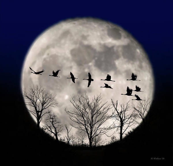 Sfx Photograph - Supermoon Geese Silhouette by Brian Wallace