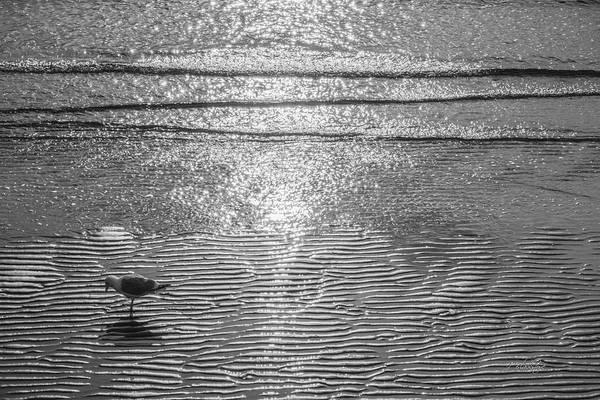 Photograph - Surf Sand Seagull by Jordan Blackstone