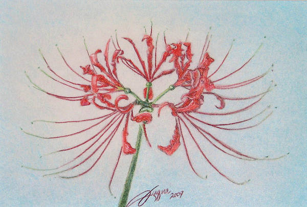 Wall Art - Drawing - Surprise Lily by Beverly Fuqua