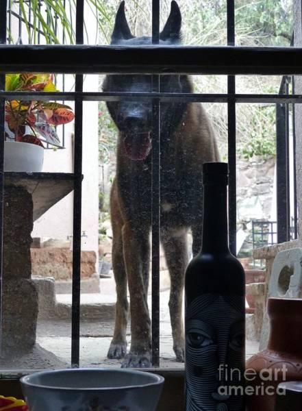 Photograph - Surprise Visitor by Rosanne Licciardi
