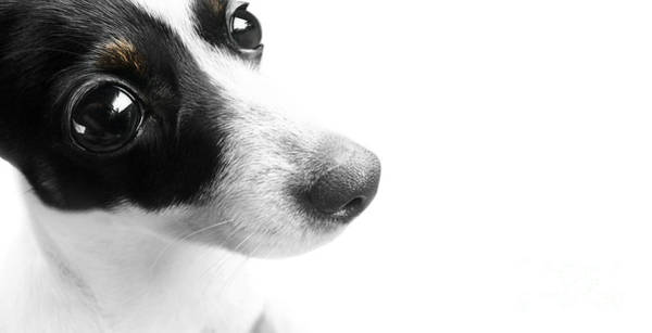 Fox Terrier Wall Art - Photograph - Surprised Dog Face by Jorgo Photography - Wall Art Gallery