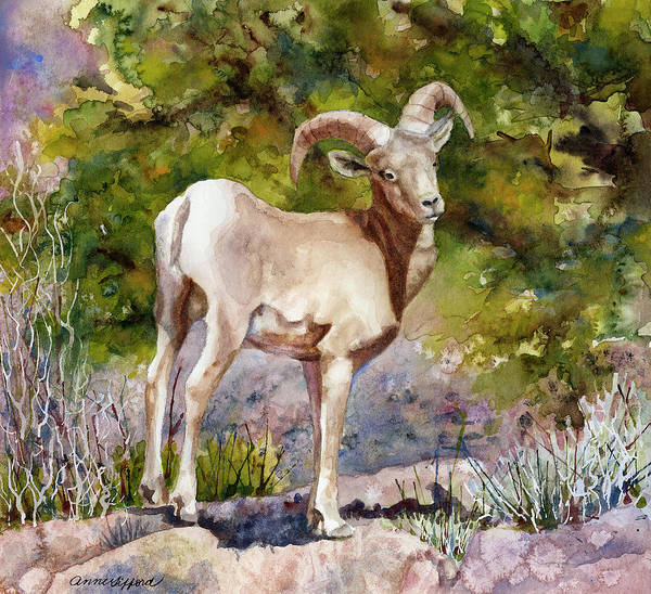 Wall Art - Painting - Surprised On The Trail by Anne Gifford
