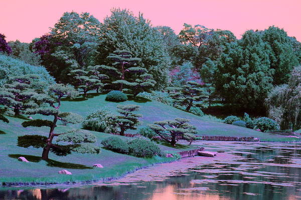 Photograph - Surreal Bonsai By Koi Pond In Calypso And Chantilly by Colleen Cornelius
