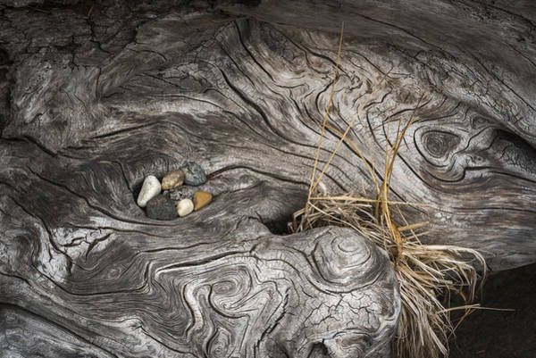 Photograph - Surreal Driftwood by Robert Potts