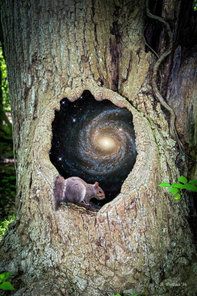 Sfx Photograph - Surreal Tree by Brian Wallace