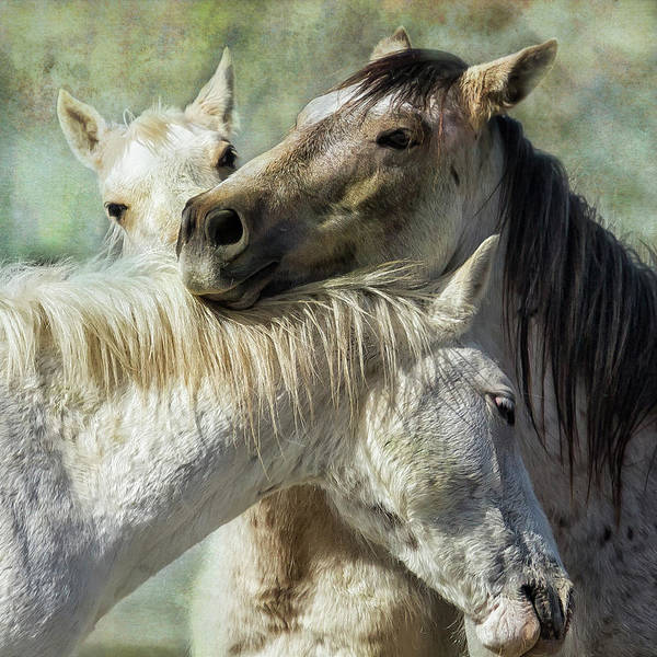 Photograph - Surrounded By Love by Belinda Greb