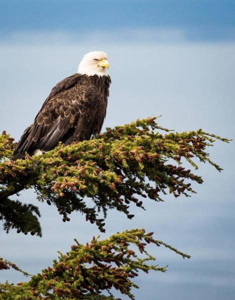 Photograph - Surveying The Treeline by Tim Newton