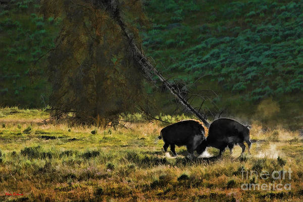 Photograph - Survival Of The Fittest Buffalo  by Blake Richards