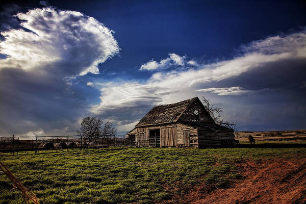 Wall Art - Photograph - Surviving The Storms by Toni Hopper