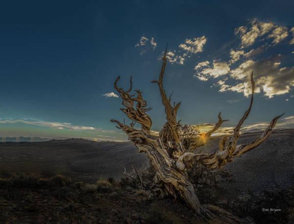 Photograph - Survivor by Tim Bryan